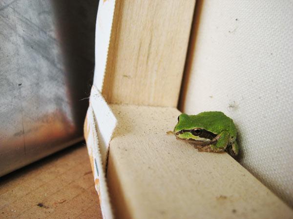 Mini green frog.
